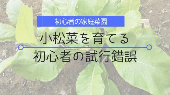 初心者にお勧めの小松菜を育ててみました。秋からの試行錯誤記録